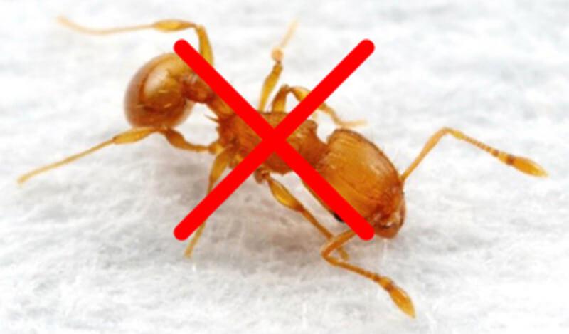 Kết quả hình ảnh cho diệt kiến