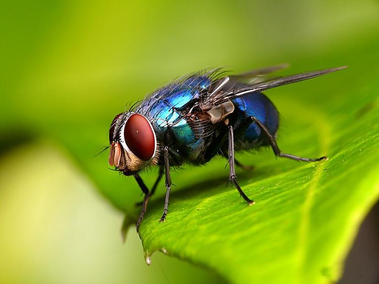 Những hình ảnh đẹp ngộ nghĩnh về các loài côn trùng - Diệt côn trùng Anh Thư TPHCM